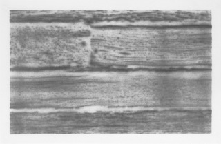 DEATH VALLEY, 2015, graphite on vellum, each 28x43 cm